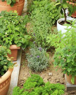 Herb Garden Designs
