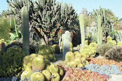Huntington Library Cactus Garden