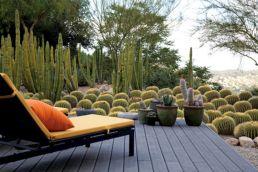 Lari Pittman Cactus Garden