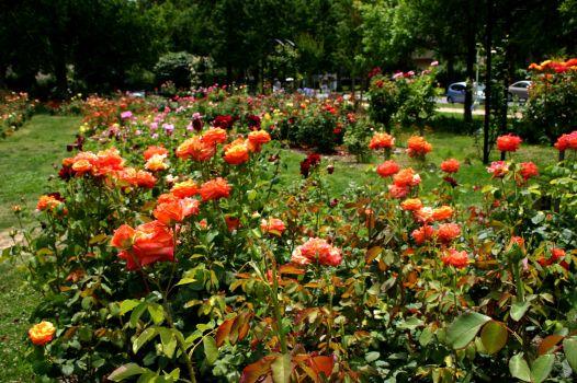McKinley Park Rose Garden