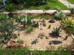 Outdoor Cactus Garden Ideas