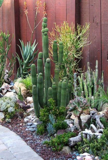 Outdoor Cactus and Succulent Gardens