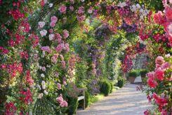Rose Garden Beautiful Ideas