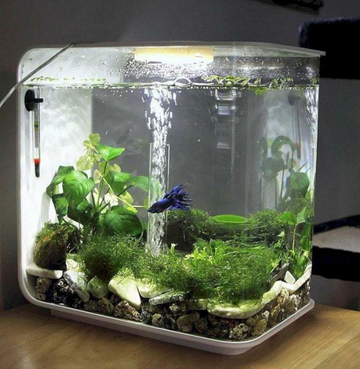 Decoration Aquarium Crevette