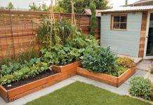 Beautiful vegetable garden layout