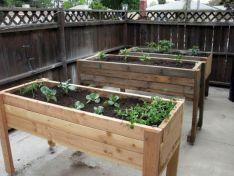 Cold Frame Gardening 2