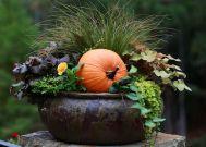 Fall Container Garden Ideas with Pumpkin