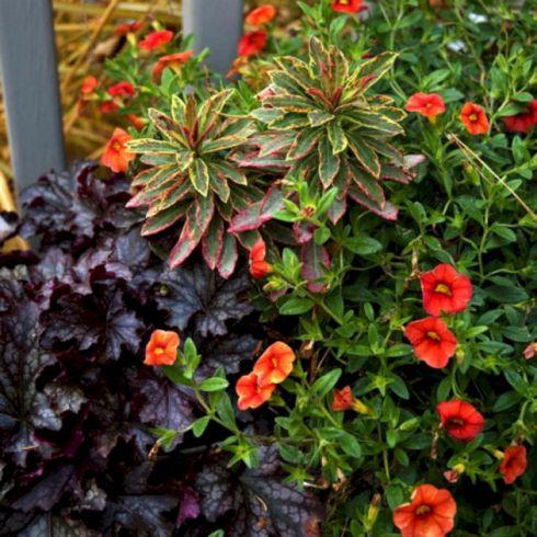 Fall Container Garden Plants Design