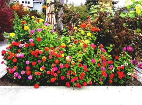 Beginners Small Flower Gardens Ideas