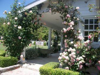 Eden Rose Design at Home
