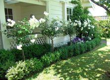 Most Beautiful Rose in Beautiful Garden