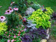 Perennial Flowers Garden Design Idea