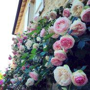 Red Eden Climbing Rose at Garden