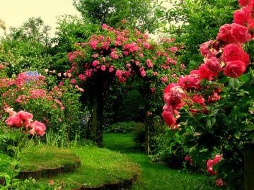Rose Flower Gardens