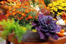 Beautiful Fall Garden Ideas For Awesome Fall Season 120