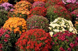 Beautiful Fall Garden Ideas For Awesome Fall Season 170