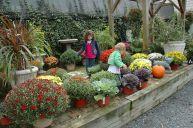 Beautiful Fall Garden Ideas For Awesome Fall Season 60