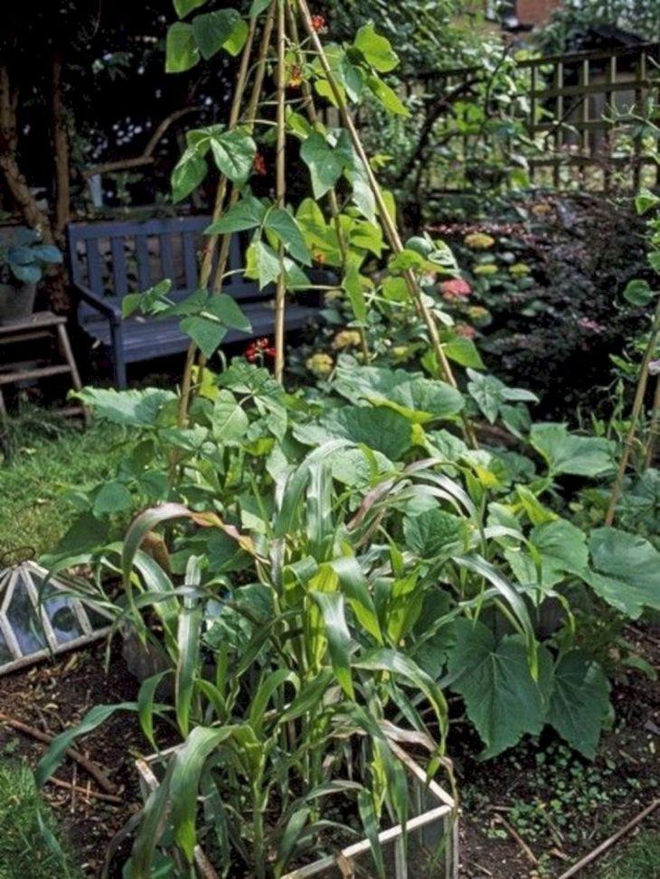 Best Small Vegetable Garden Ideas