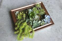 DIY Succulent Wall Art Design Ideas