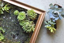 DIY Succulent Wall Art Design