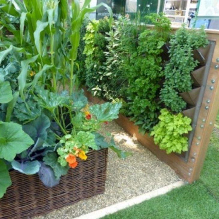 Growing a Small Vegetable Garden
