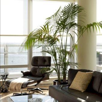 Modern Living Room Indoor Plants