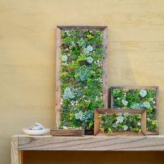 Succulent Garden Wall Art