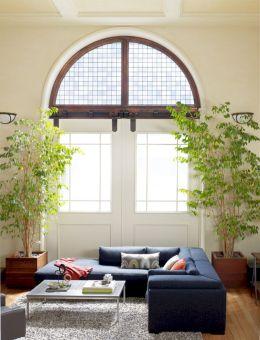 Tall Living Room Plants