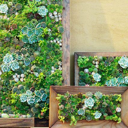 Vertical Wall Garden Succulents