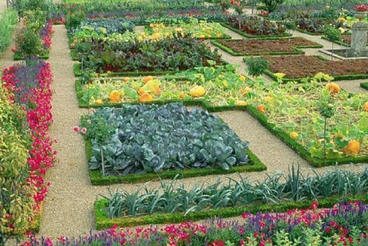 Backyard Vegetable Garden Layout Design