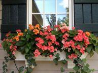 Best Peony Garden Design