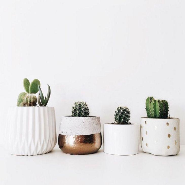 Cactus Pots Ideas