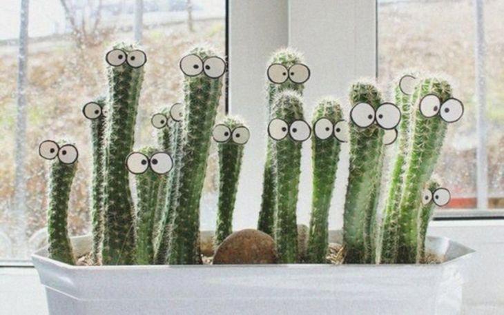 Creative Cactus Ideas