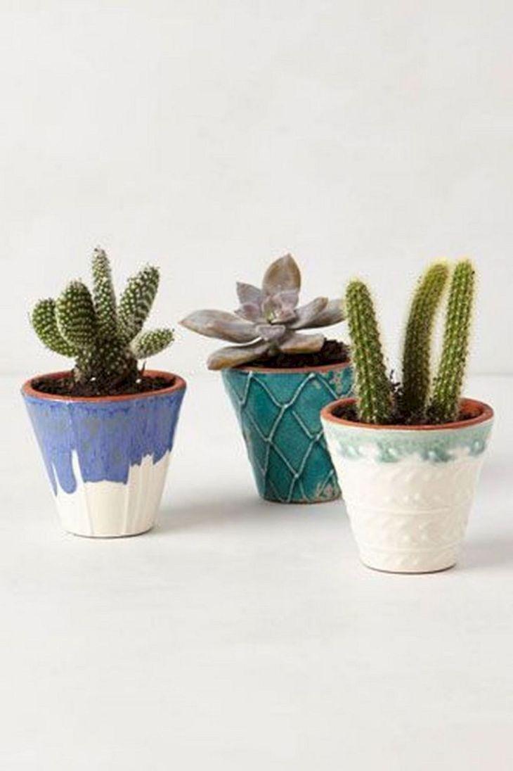 Decorating Cactus