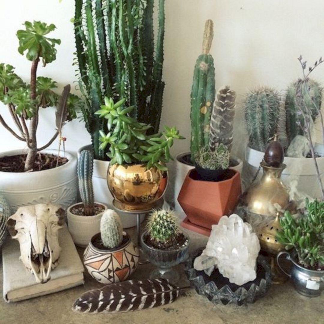 Indoor Cactus Garden Ideas Design Decoredo