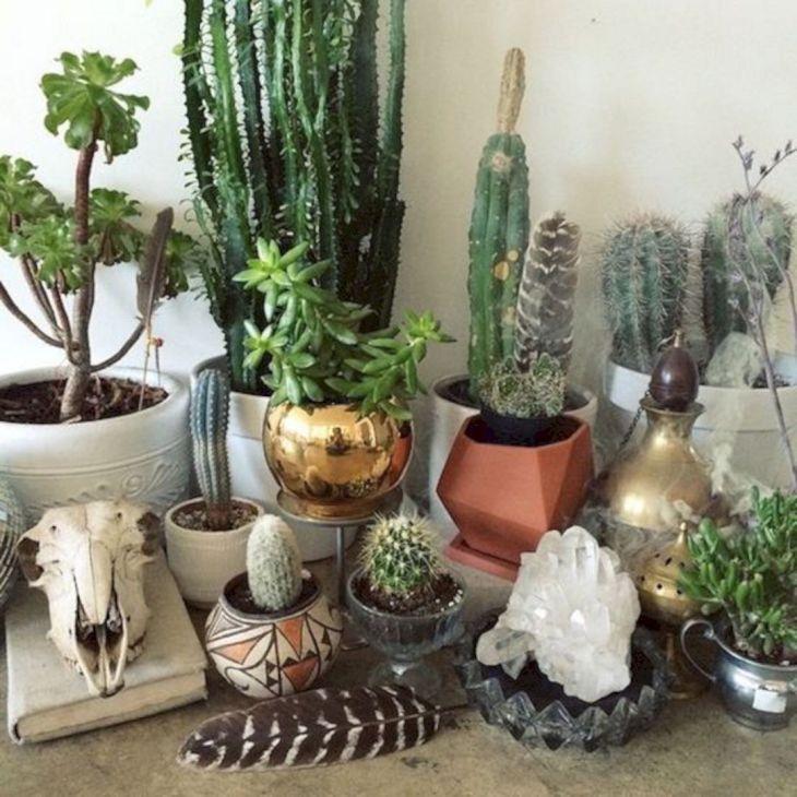 Indoor Cactus Garden Ideas Design