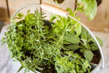 Indoor Herb Garden Container Ideas