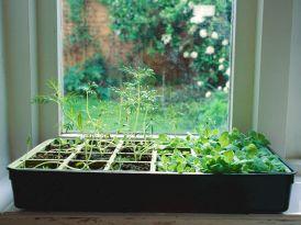 Indoor Herb Garden Container