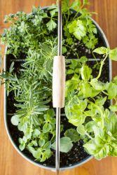 Indoor Herb Garden Containers