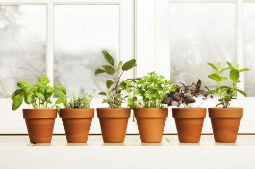 Indoor Herb Gardens Idea