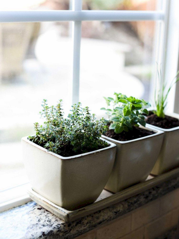 Indoor Herb Gardens Ideas