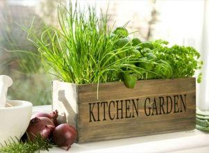 Kitchen Herb Gardens