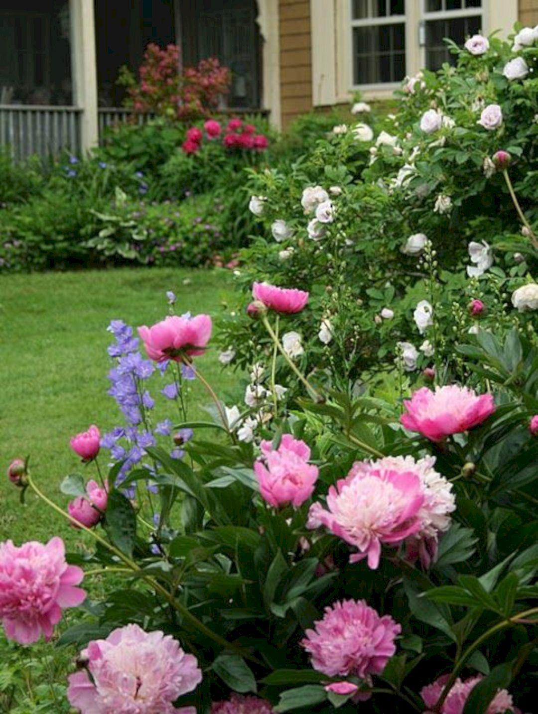 Peony Cottage Garden