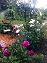 Peony Garden Ideas Design