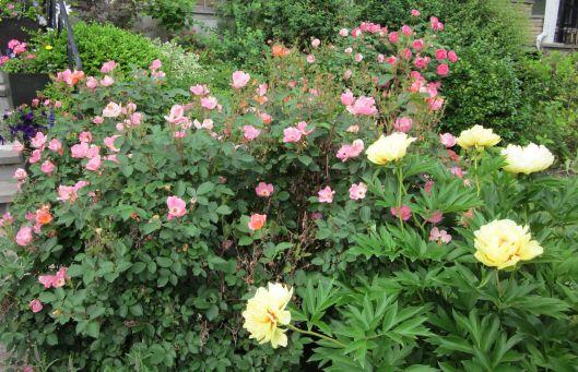 Perennial Flower Garden Design