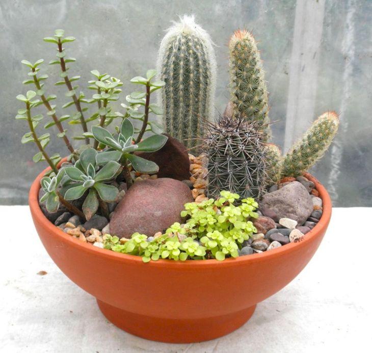 Terrarium Cactus Garden