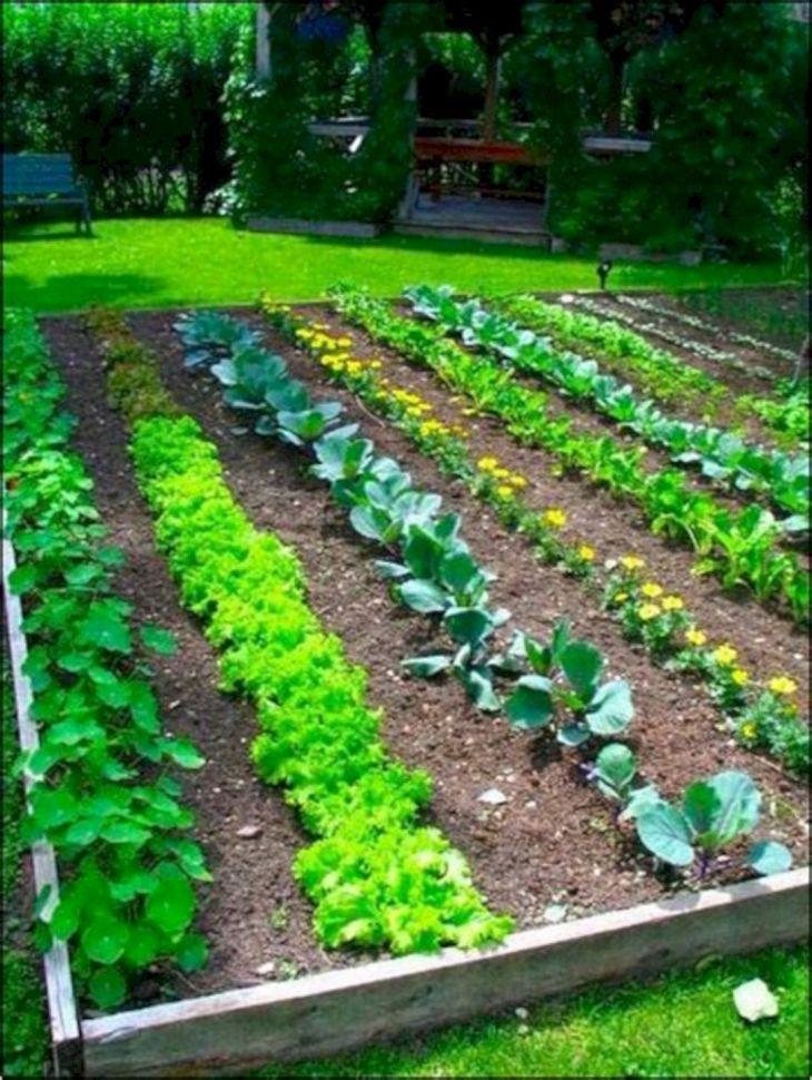 25+ Easy Vegetable Garden Layout Ideas For Beginner