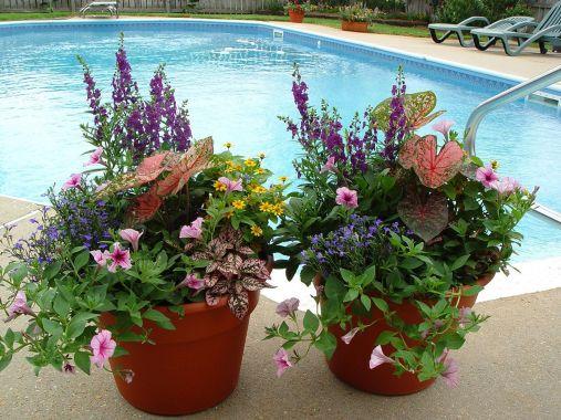 Container Flower Garden Design