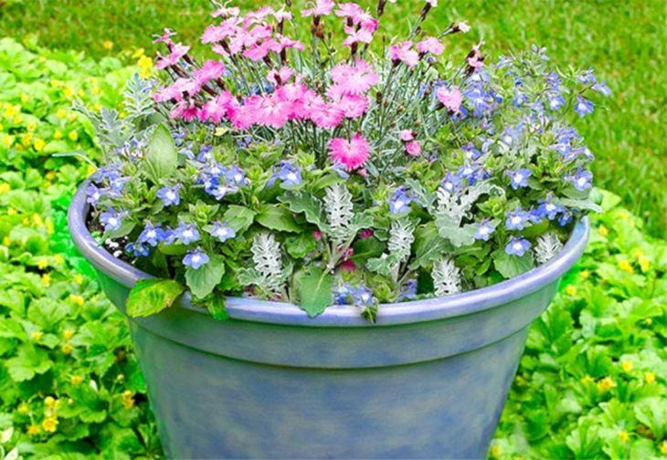 Container Flower Garden Designs