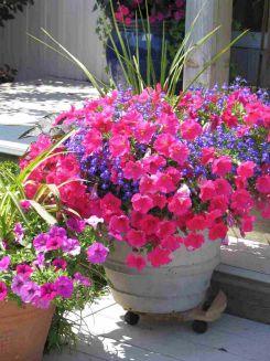 Container Garden with Petunias
